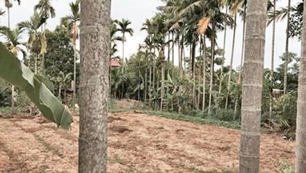 Bị trượt chân rơi xuống bờ mương khi hái trộm dừa, nam thanh niên chết ngạt - anh 1
