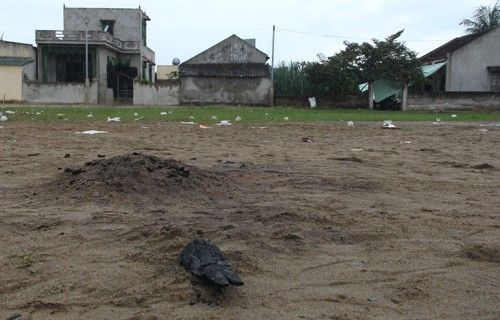 Thanh Hoá: 75 người bị bỏng do đốt lửa trại - anh 1