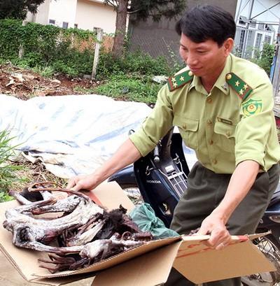 5 con voọc chà vá chân đen bị sát hại ở rừng giáp ranh - anh 1