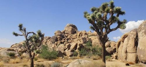 Thực hư những hộp sọ khổng lồ nơi thung lũng Chết - anh 1
