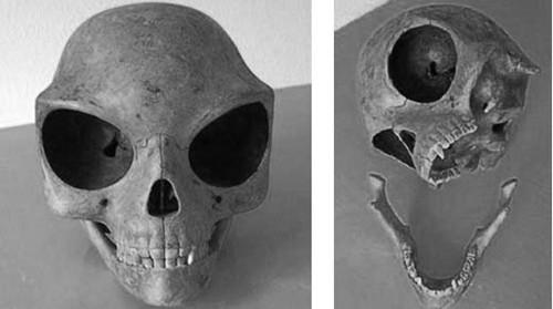 Nghi vấn hộp sọ kì lạ của người ngoài hành tinh - anh 1