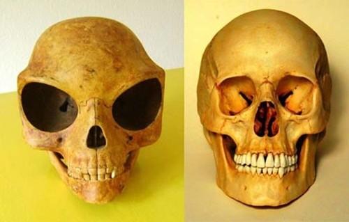 Nghi vấn hộp sọ kì lạ của người ngoài hành tinh - anh 2