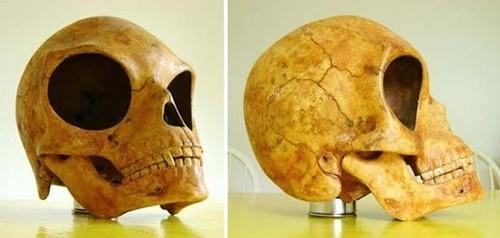 Nghi vấn hộp sọ kì lạ của người ngoài hành tinh - anh 3