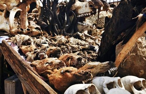 Những bí ẩn bên trong khu chợ bùa ngải lớn nhất thế giới - anh 9