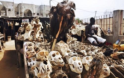 Những bí ẩn bên trong khu chợ bùa ngải lớn nhất thế giới - anh 7