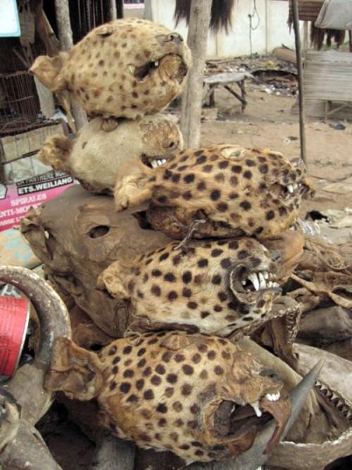 Những bí ẩn bên trong khu chợ bùa ngải lớn nhất thế giới - anh 1