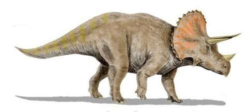 """Hiện vật chứng minh loài người từng dùng khủng long làm """"ngựa""""? - anh 2"""