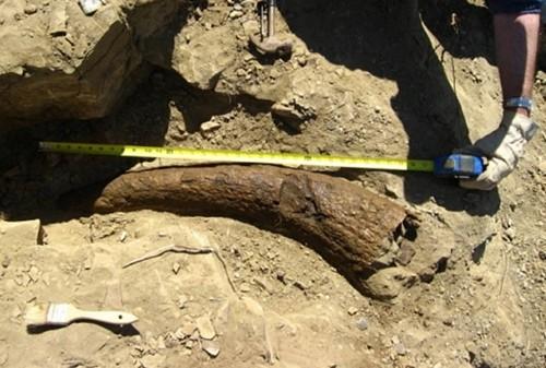 """Hiện vật chứng minh loài người từng dùng khủng long làm """"ngựa""""? - anh 1"""