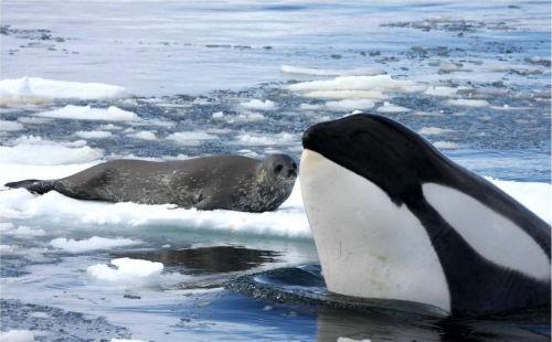 17 sự thật chưa biết về châu Nam Cực - anh 10