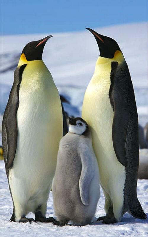 17 sự thật chưa biết về châu Nam Cực - anh 12