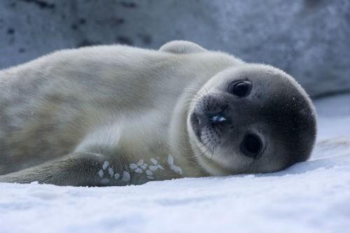 17 sự thật chưa biết về châu Nam Cực - anh 11