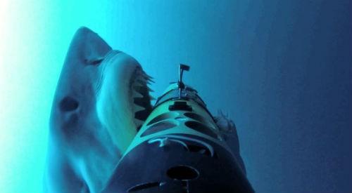 Khám phá thế giới của 'cỗ máy giết người' đại dương - anh 7