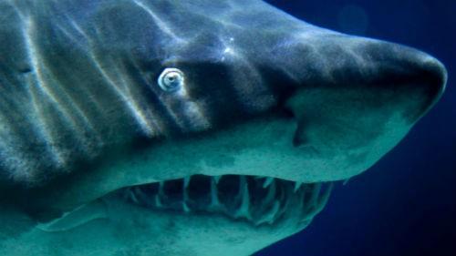 Khám phá thế giới của 'cỗ máy giết người' đại dương - anh 6