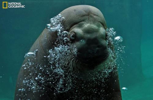 10 bức ảnh 'hớp hồn' của giới nhiếp ảnh gia dự 'Cuộc thi ảnh' National Geographic 2014 - anh 4