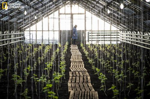 10 bức ảnh 'hớp hồn' của giới nhiếp ảnh gia dự 'Cuộc thi ảnh' National Geographic 2014 - anh 6