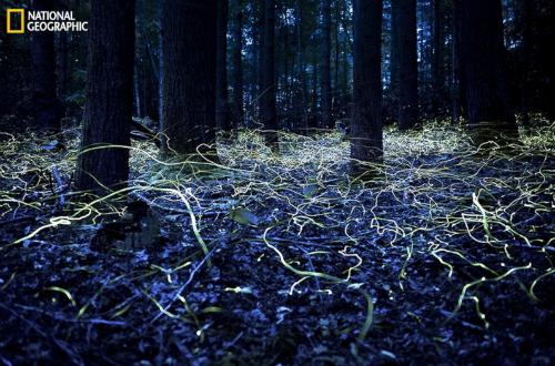 10 bức ảnh 'hớp hồn' của giới nhiếp ảnh gia dự 'Cuộc thi ảnh' National Geographic 2014 - anh 7