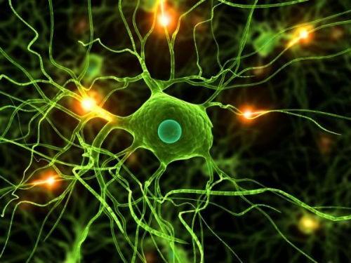 Hành trình khám phá bí ẩn não bộ, cơ quan phức tạp nhất vũ trụ - anh 4