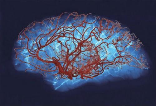 Hành trình khám phá bí ẩn não bộ, cơ quan phức tạp nhất vũ trụ - anh 3