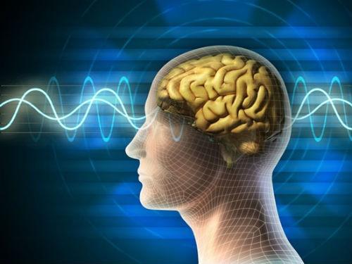 Hành trình khám phá bí ẩn não bộ, cơ quan phức tạp nhất vũ trụ - anh 1