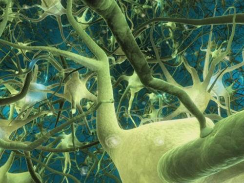 Hành trình khám phá bí ẩn não bộ, cơ quan phức tạp nhất vũ trụ - anh 5