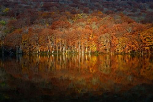 Chùm ảnh: Những bức ảnh tuyệt đẹp của National Geographic - anh 6