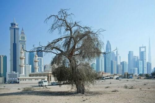 Chùm ảnh: Những bức ảnh tuyệt đẹp của National Geographic - anh 7