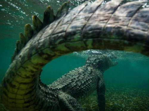 Chùm ảnh: Những bức ảnh tuyệt đẹp của National Geographic - anh 1