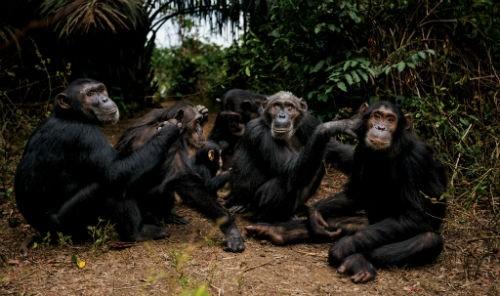 Chùm ảnh: Những bức ảnh tuyệt đẹp của National Geographic - anh 9