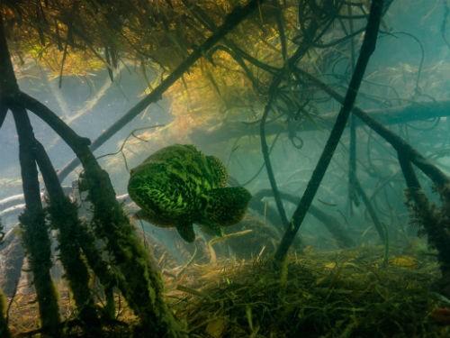 Chùm ảnh: Những bức ảnh tuyệt đẹp của National Geographic - anh 10