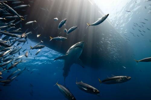 Chùm ảnh: Những bức ảnh tuyệt đẹp của National Geographic - anh 16