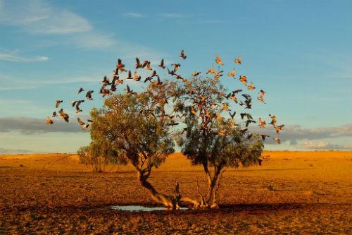 Chùm ảnh: Những bức ảnh tuyệt đẹp của National Geographic - anh 19