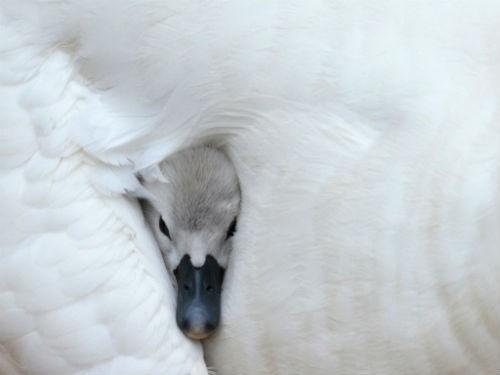 Chùm ảnh: Những bức ảnh tuyệt đẹp của National Geographic - anh 21