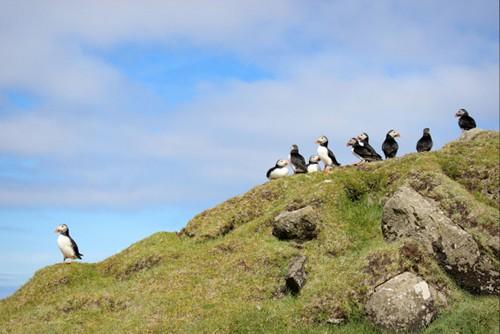 Khám phá vẻ đẹp nguyên sơ của ngọc đảo Faroe qua những trải nghiệm kỳ thú - anh 12