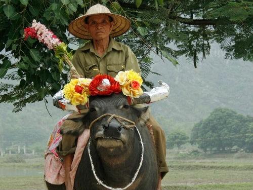 Ngắm nét bình dị của nông thôn Việt Nam trên báo nước ngoài - anh 9