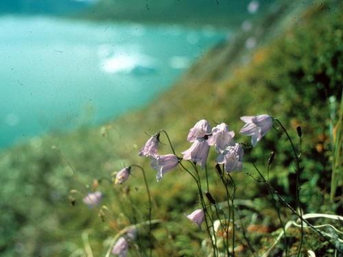 Khám phá vẻ đẹp hút hồn của vịnh băng Ilulissat - anh 6