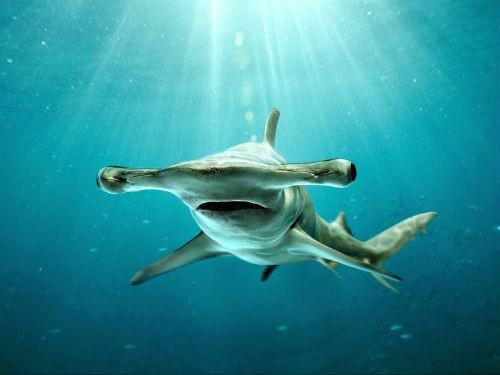Top 10 loài động vật lớn nhất, nhanh nhất và 'sát thủ' nhất đại dương - anh 8