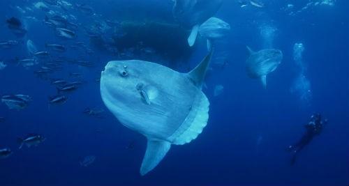 Top 10 loài động vật lớn nhất, nhanh nhất và 'sát thủ' nhất đại dương - anh 9