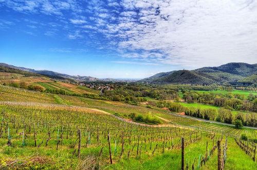 Ngắm vẻ quyến rũ 12 vùng sản xuất rượu vang trứ danh của Pháp - anh 2
