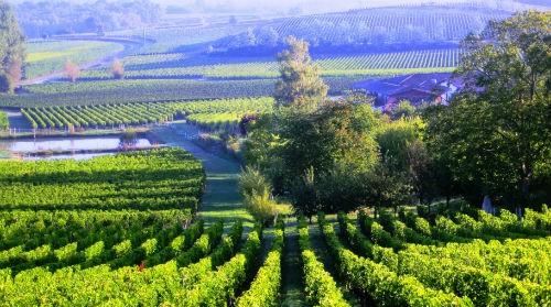 Ngắm vẻ quyến rũ 12 vùng sản xuất rượu vang trứ danh của Pháp - anh 11