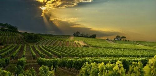 Ngắm vẻ quyến rũ 12 vùng sản xuất rượu vang trứ danh của Pháp - anh 19