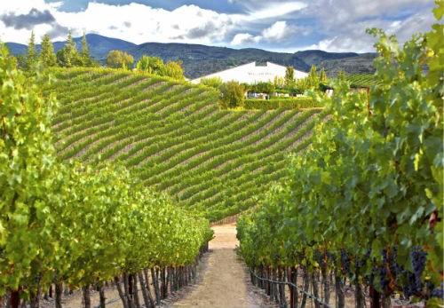 Ngắm vẻ quyến rũ 12 vùng sản xuất rượu vang trứ danh của Pháp - anh 3