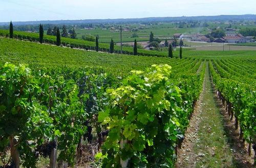 Ngắm vẻ quyến rũ 12 vùng sản xuất rượu vang trứ danh của Pháp - anh 4