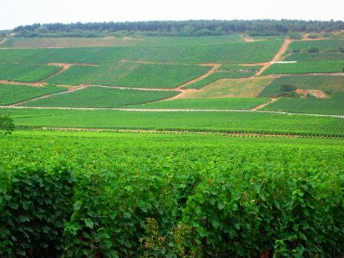 Ngắm vẻ quyến rũ 12 vùng sản xuất rượu vang trứ danh của Pháp - anh 7