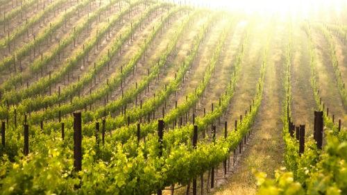 Ngắm vẻ quyến rũ 12 vùng sản xuất rượu vang trứ danh của Pháp - anh 16