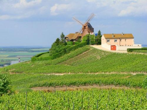 Ngắm vẻ quyến rũ 12 vùng sản xuất rượu vang trứ danh của Pháp - anh 6