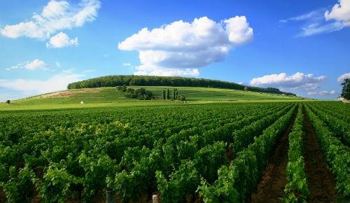Ngắm vẻ quyến rũ 12 vùng sản xuất rượu vang trứ danh của Pháp - anh 10