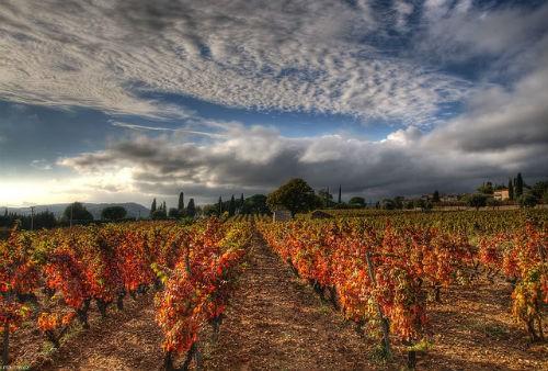 Ngắm vẻ quyến rũ 12 vùng sản xuất rượu vang trứ danh của Pháp - anh 21
