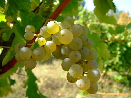 Ngắm vẻ quyến rũ 12 vùng sản xuất rượu vang trứ danh của Pháp - anh 20