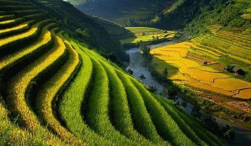 Vẻ đẹp ngút ngàn của các cánh đồng lúa trên toàn thế giới - anh 4