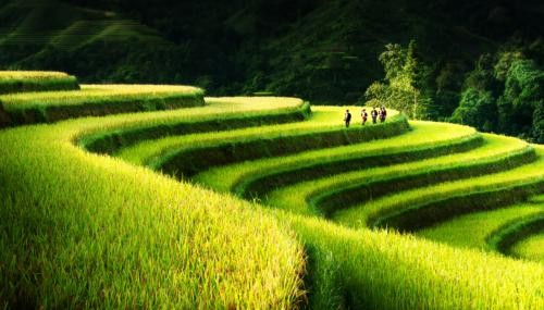 Vẻ đẹp ngút ngàn của các cánh đồng lúa trên toàn thế giới - anh 9
